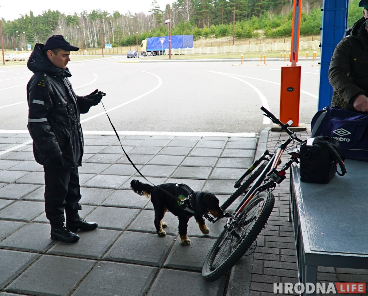 собаки на границе Гродненская таможня кинологи