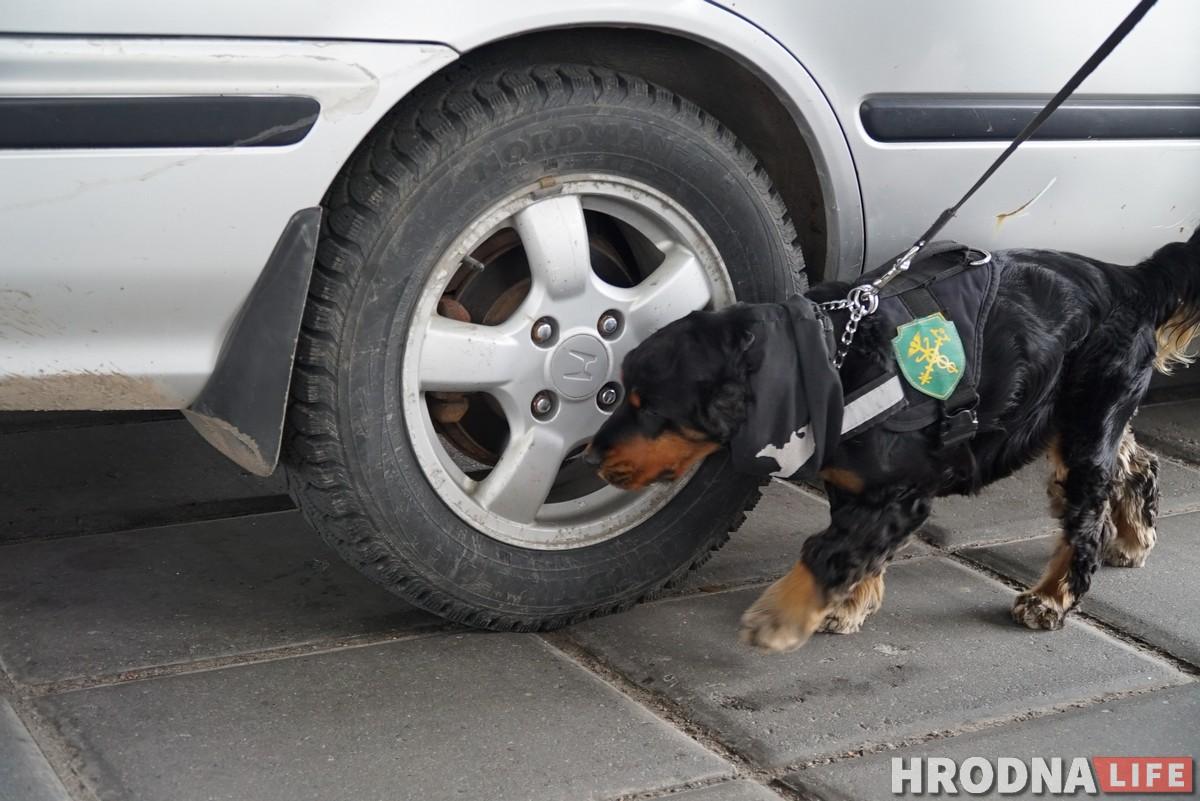 собаки на границе кинологи граница