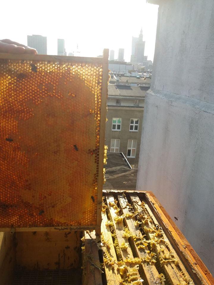 Правильные пчелы живут на крыше. Зачем ставить ульи в городе?