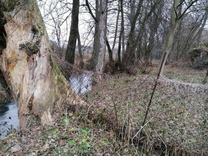 Гродненскую форель хотят охранять в рамках международного проекта. Что сейчас с реками под Гродно, где ее ловили руками