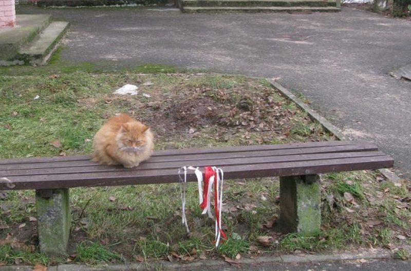 Кот в Мостах пикетирует с б-ч-б-ленточками пятый месяц подряд