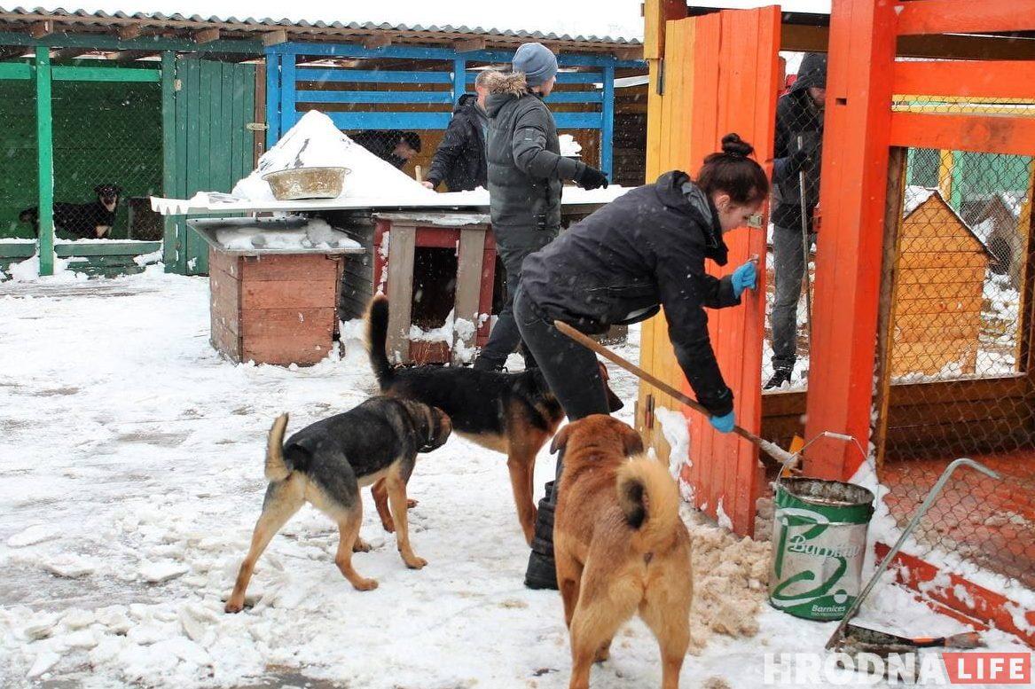 Прежде чем снова запускать подопечных в вольеры, помощница Маргарита до конца убирала снег, чтобы двери хорошо закрывались.