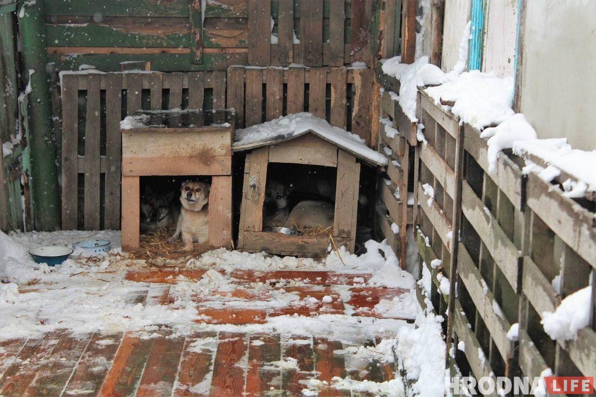 Некоторые собаки терпеливо ждали, когда уберут их территорию. Другие ходили за помощниками и все контролировали