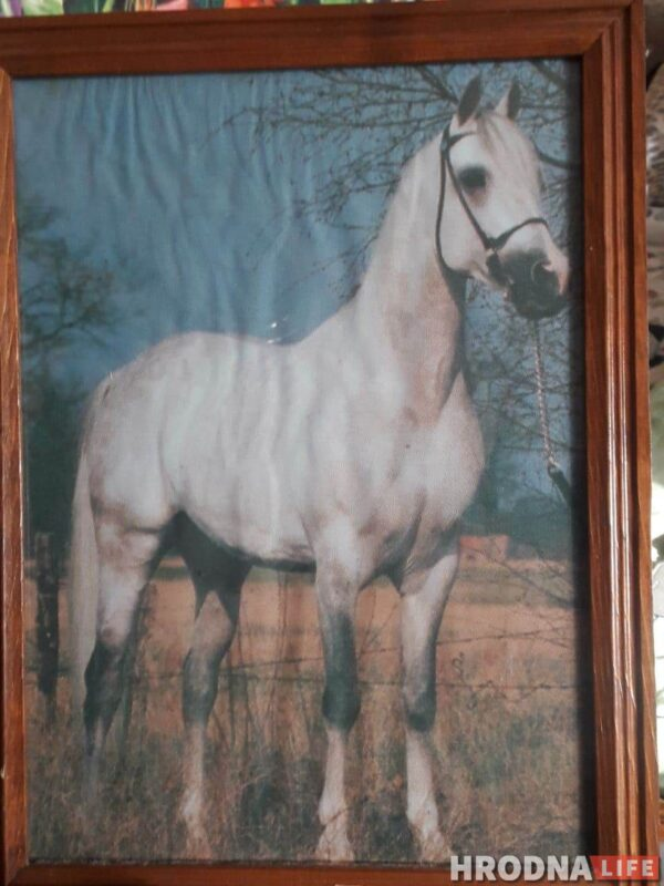 """""""Увидел лошадь и понял: хочу быть рядом всегда"""" Артур не слышит и не говорит, но смог найти общий язык с лошадьми и цветами"""