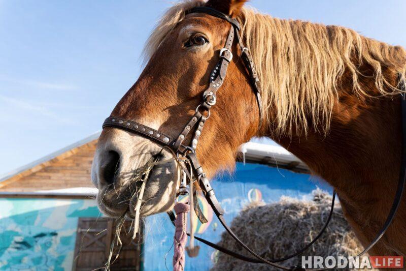 Лошадь Белка - самая спокойная в хозяйстве. Она катает даже самых маленьких наездников. Фото: Елена Миронова  \ иппотерапия