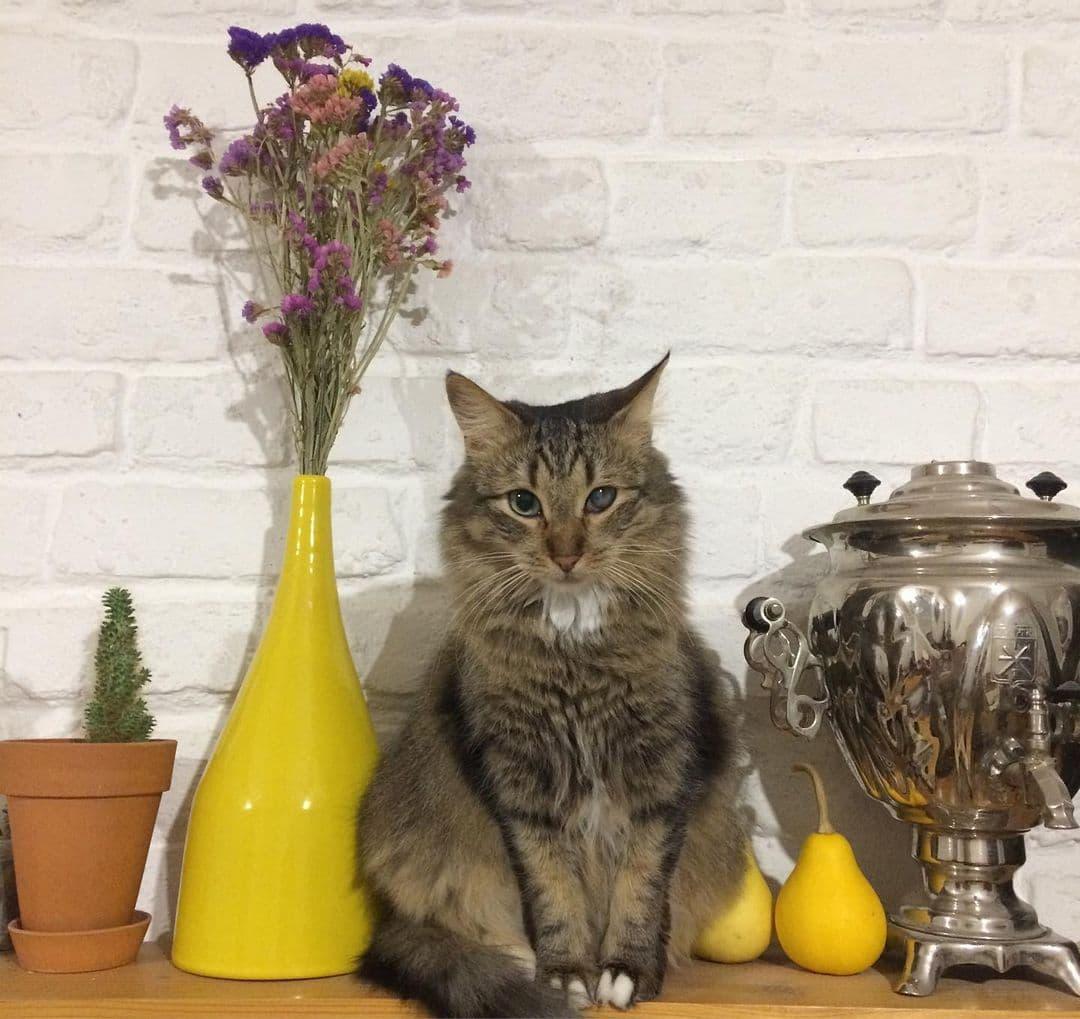«Сталинка» и кошки на чемоданах. Декоратор из Гродно - о высоких потолках и рассветах тихого центра