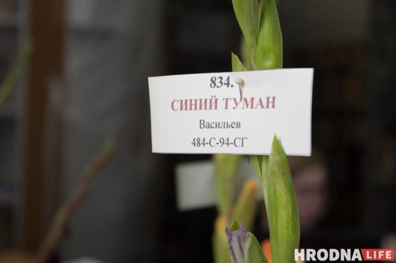 """""""Были бы Грушевые, занимались бы грушами"""". Алла Квятковская рассказала, как выращивает 10 000 гладиолусов и почему любит """"Свет далёкой звезды"""""""